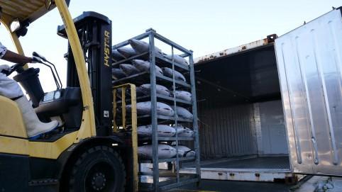 L'objectif est d'exporter chaque année vers l'Europe 200 à 300 tonnes de thon blanc.